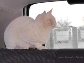 Miaunel în izolare